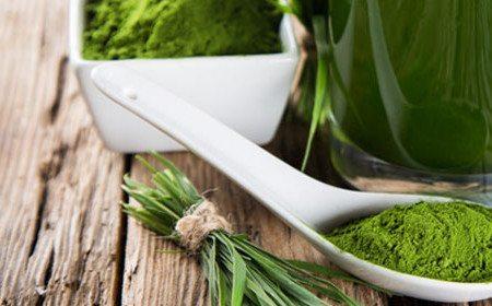 Getreidegräser & grüne Nahrung