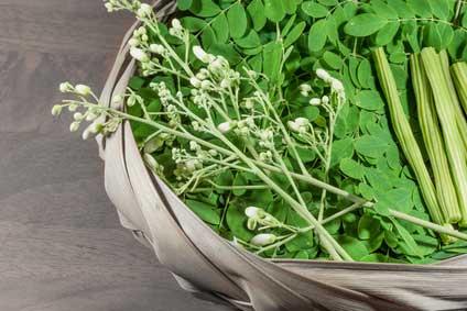 Moringa Oleifera - Pflanzenpulver, Superfood & Kosmetik | GrünePerlen